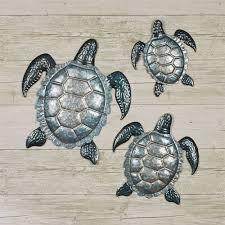tranquil sea turtle indoor outdoor