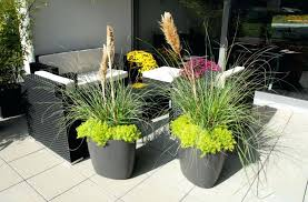 container plant ideas front door patio potted plants for invigorating doors and welcome flower pot flossy