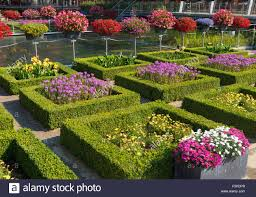 blooming flowers in a beautiful garden with square cut hedges