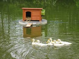 charming build a floating duck house plans lovely 37 free diy coop