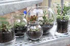 ... Unique Terrarium Ideas 16 Inexpensive Terrarium Containers With Unique  Glass Jars ...