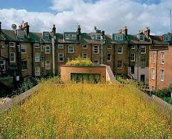 best green roofs images green roofs 139 best green roofs images green roofs architecture and green architecture