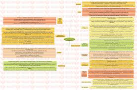 insights mindmaps s foreign policy insights insights mindmaps s foreign policy