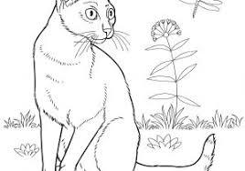 Disegni Da Colorare Per Ragazzi Con Gatti Cats 13 Disegni Da