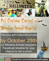 Pet Halloween Costume Contest Flyer Community Events