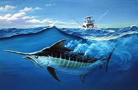 Image result for blue marlin fishing pics
