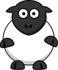 Image result for silly sheep
