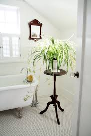 bathroom, Small Space For Bathroom With Tiny End Table For Good Bathroom  Plants On White