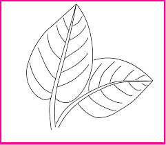 Leaf Coloring Pages Printable | Activity Shelter