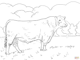 Small Picture Angus Bull coloring page Free Printable Coloring Pages