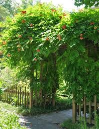 Awesome Inspirations To Make Wall Climbing Plants On Your Wall Climbing Plants For Shade
