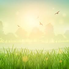 Nature background of a grassy landscape Vector Free Download