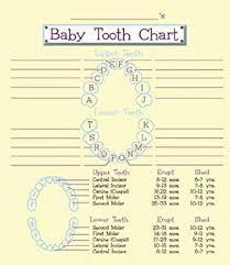Baby Tooth Album Organizer Amazon Co Uk Baby