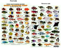 62 Described Coral Reef Fish Chart