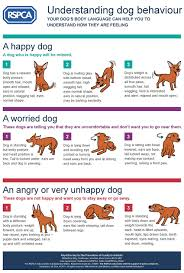 Understanding Your Dogs Body Language Rspca