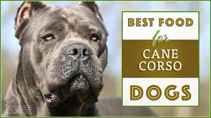 Cane Corso Weight Chart Pounds 10 Best Healthiest Dog Food For Cane Corsos In 2019