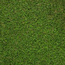 Grass Cartoon Neograss Aberdeen Above Picture Neograssbackingproductpicture Neograss Aberdeen By Neograss Neograss