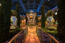 lemons and cypress tress create the base for the bellagio s conservatory botanical gardens transformation into the picturesque island of capri italy