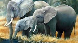 Desktop 3d Elephant Wallpaper