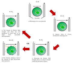 The Electroporation Mechanism Of Microalga Cell Membrane Download