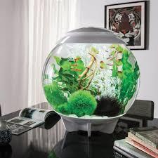Modern Fish Tank 87 Best Modern Contemporary Fish Tanks Images On Pinterest