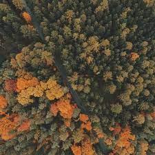 Trees Top View #iPad #Pro #wallpaper ...