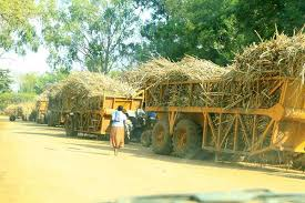 Image result for ruto addressing cane farmers in kakamega