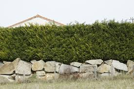 How to Create and Maintain a Low-Maintenance Hedge