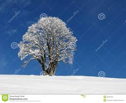 january winter background. Contemporary January Maple Tree In Winter Winter Background With January Background W