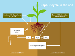 Plant Nutrient Interaction Chart Facts Advice Jse Systems Ltd