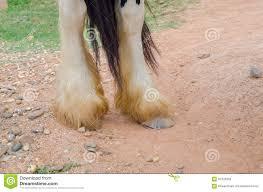 Sluit Omhoog Van Benen Zigeuner Vanner Paard Stock Afbeelding