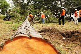 Advantages Of Tree Removal Service | by Union Treeservices | Medium