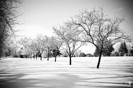 black and white snow photography. Interesting Snow Row Of Trees In The Snow Black U0026 White To Black And White Photography M