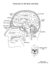 Small Picture Brain Structures Labeled Coloring Page