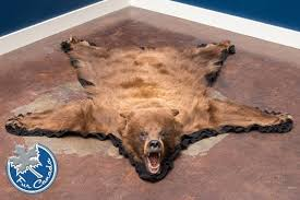 Cinnamon Bear 02 - Black Bear Skin Rugs