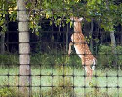 how to build a deer fence benner s
