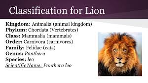 Hierarchical Classification Mountian Lion Related Keywords