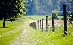 nature backgrounds hd. Unique Nature Nature Fence Fencing Meadow Grass Green Tree Foliage  For Nature Backgrounds Hd S