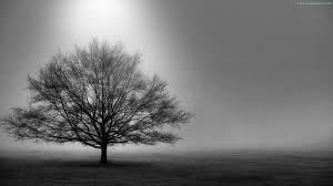 black and white images of trees 25 desktop wallpaper