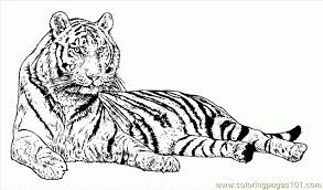 Small Picture Free Tiger Coloring Pages Free Free Tiger Coloring Pages In Tigers