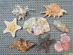 Zee schelpen reinigen