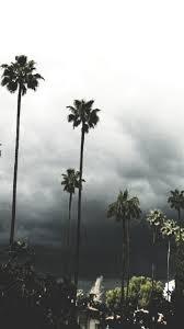 palm trees tumblr. Palm Trees🌴🌊 Like Or Reblog If You Save It Use Trees Tumblr