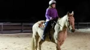 Dream Catchers Horse Ranch DreamCatcher Horse Ranch and Rescue Clermont All You Need to 52
