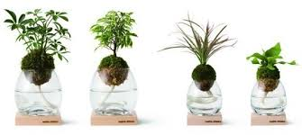 great office plants. Pianta Stanza Botanical Candle Torch Great Office Plants