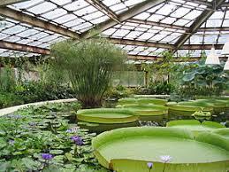 Ботанический сад БИН РАН Википедия Ботанический сад Санкт Петербурга оранжерея водных растений