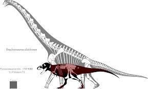 brachiosaurus size brachiosaurus altithorax and tyrannosaurus rex has ilia that are not