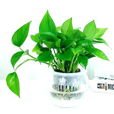 Small plant for office desk Small House Good Desk Plants Office Plants Plants For Office Desk Large Size Of Small Indoor Good Best Good Desk Plants Pinterest Good Desk Plants Cubicle Plant Large Size Of Good Office Desk Plants