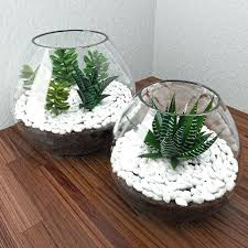 plants in glass bowl growing succulents bowls