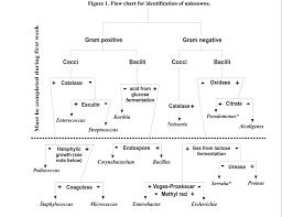 Unknown Bacterial Identification Chart Bedowntowndaytona Com