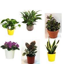 Office cubicle plants Indoor Plants Best Plants For The Office Popsugar Smart Living Pinterest Low Maintenance Plants For Your Cubicle Boulot Pinterest